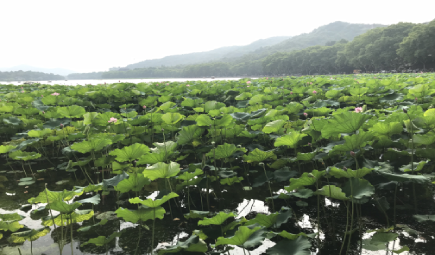 江苏省《液化气体自动灌装衡器通用技术规范》通过审查