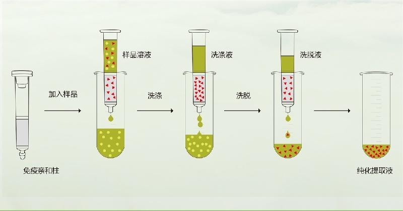 玉米赤黴烯酮免疫親和柱檢測流程